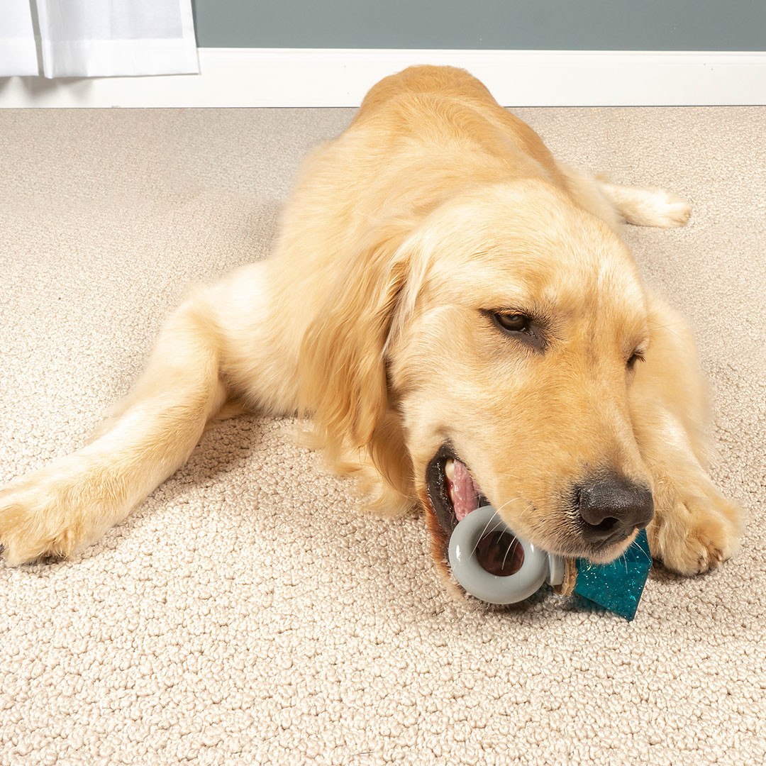 PetSafe launches five interactive toys for the Holidays!