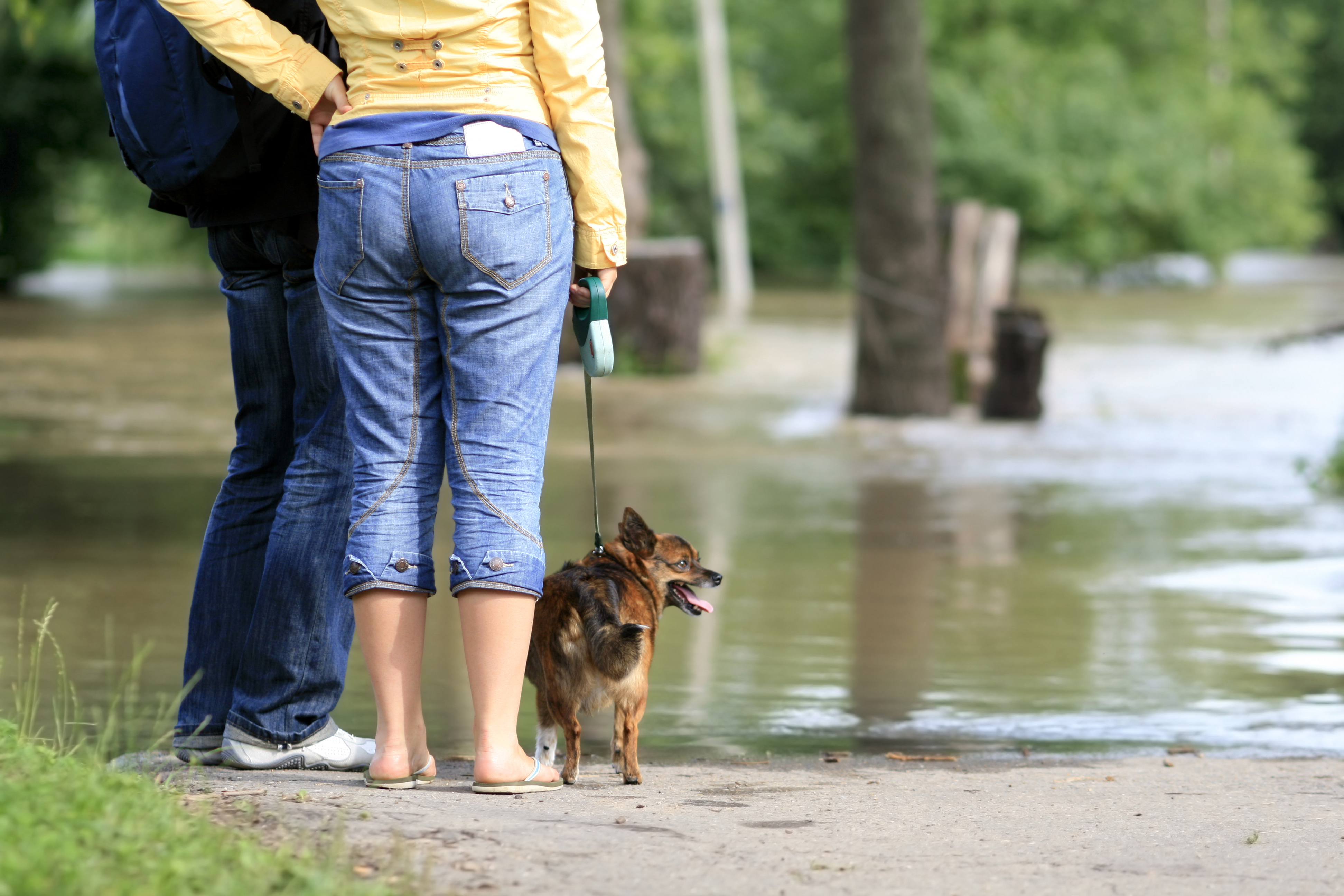 Purina aids people, pets impacted by flooding