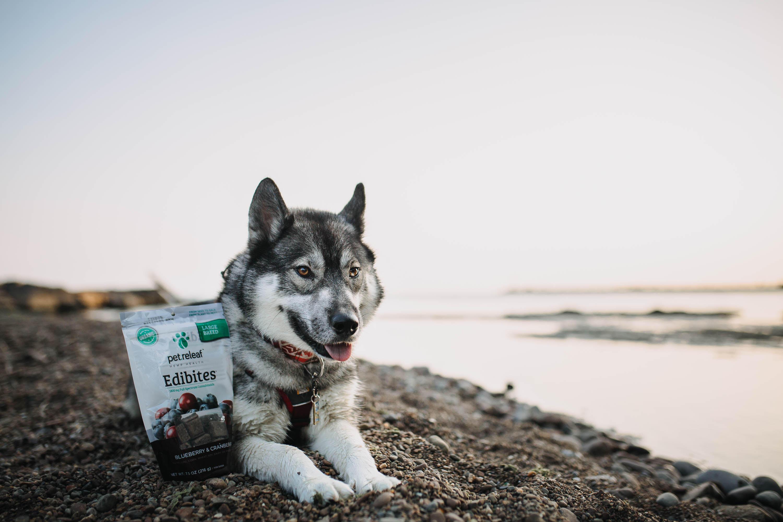 Elixinol acquires equity interest in Pet Releaf