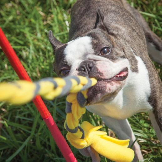 An image of Tether Tug – Small Tether Tug (Indoor/Outdoor Toy)