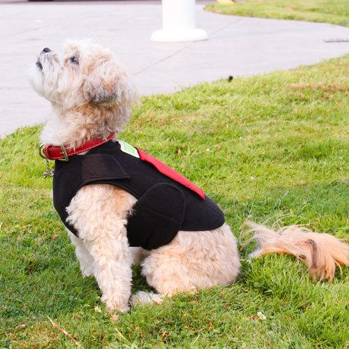 An image of Healers Petcare, Inc - HEALERS Dog Anxiety Therapeutic Multi Use Wrap - X-Small (Front)